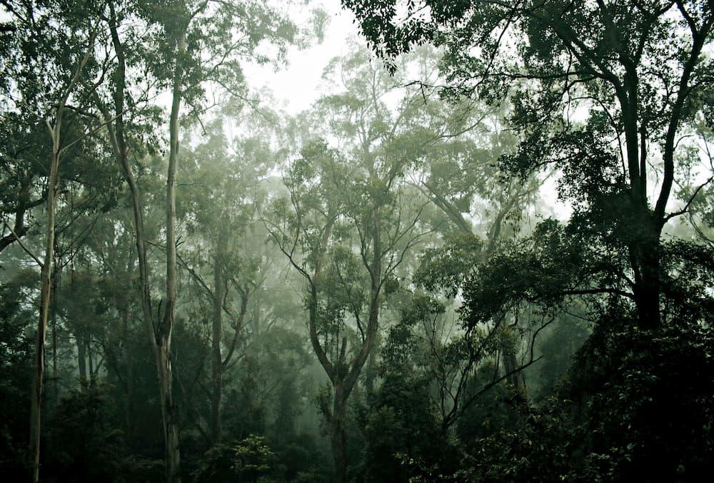 オーストラリアのキャンプで出会える美しきものたち